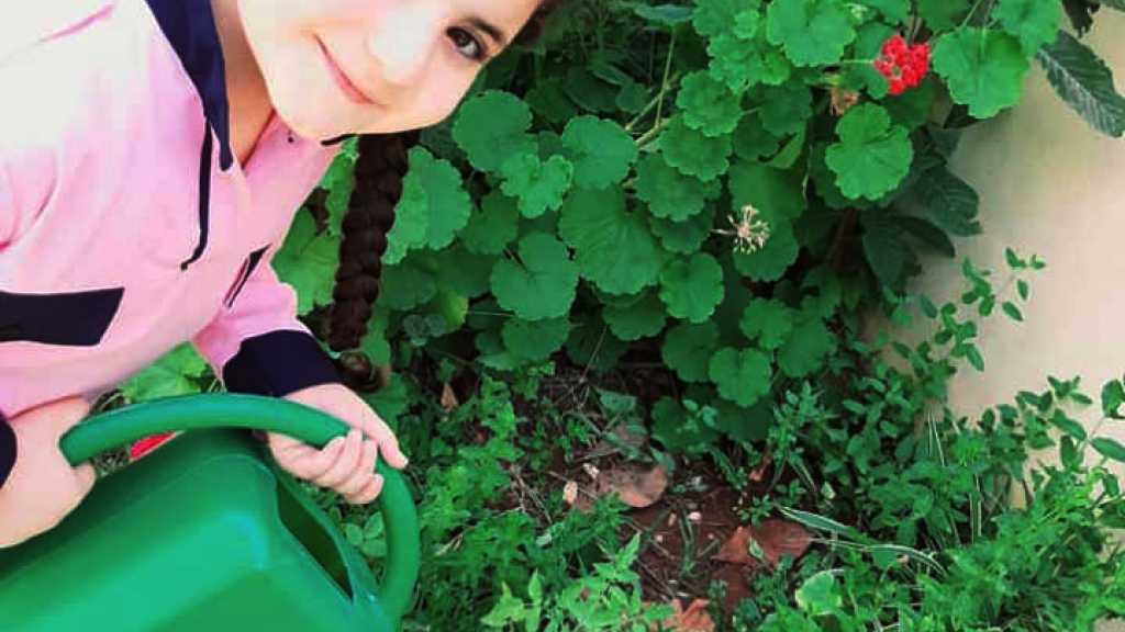 كيف أزرع لبرعمات كونين